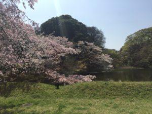皇居の桜2018