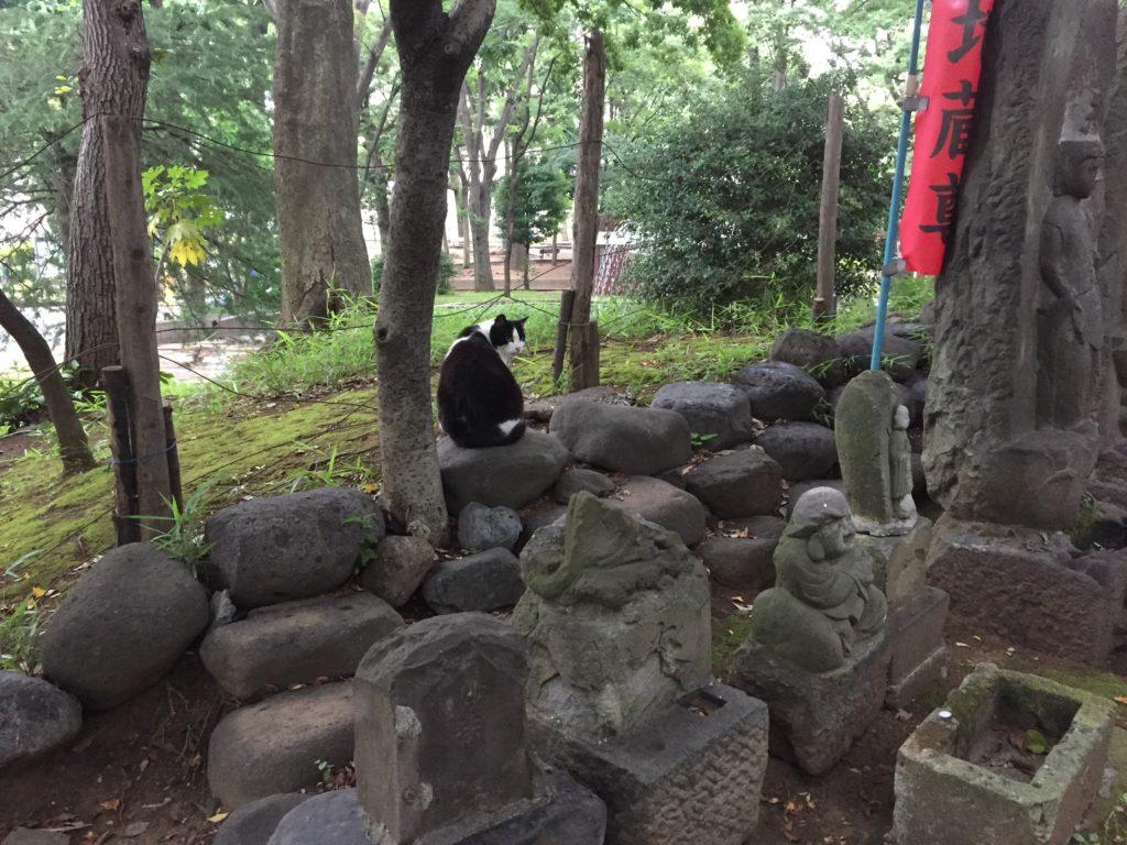 大塚公園のヌコ